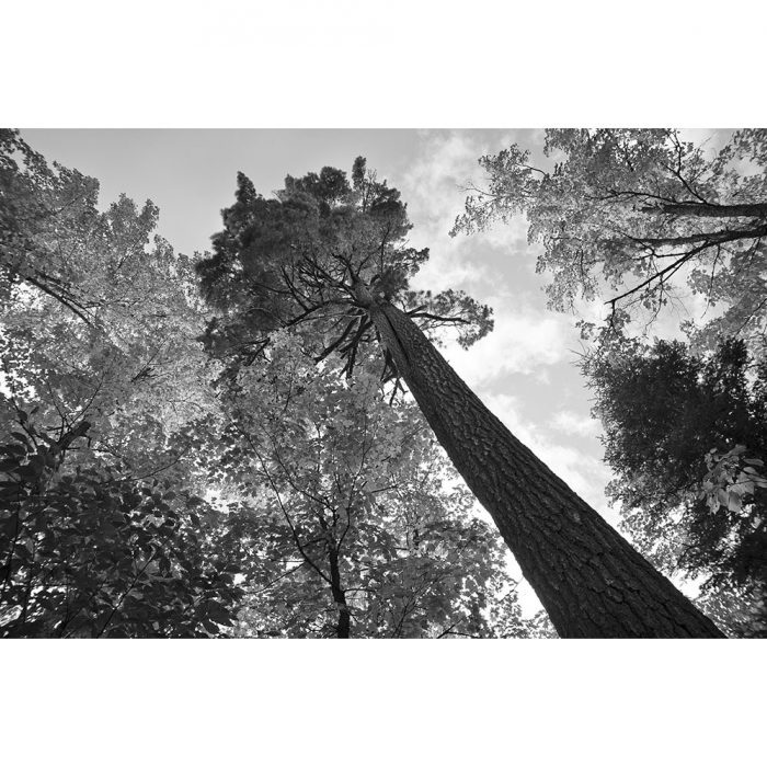 foto_laestanteria_loscuadros_naturaleza_arbol_feliz_canada_soloimpresion