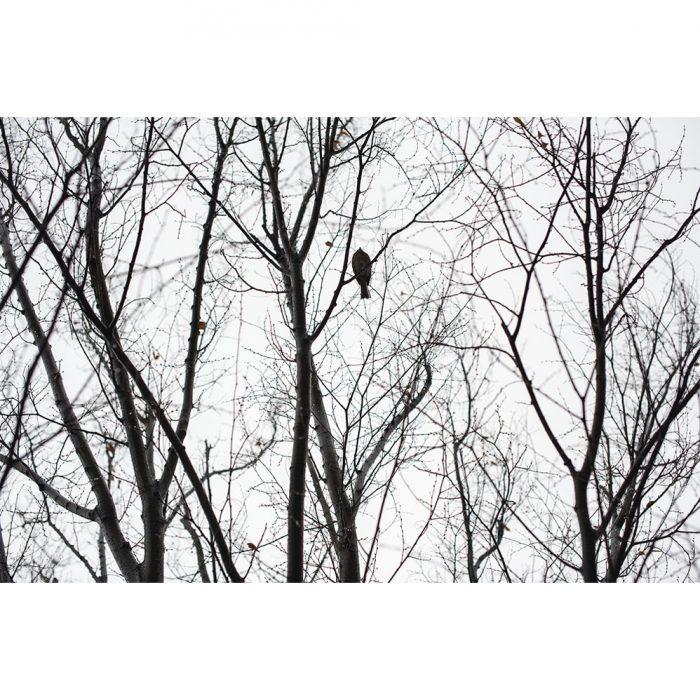foto_pajaro_ny_invierno_naturaleza_soloimpresion