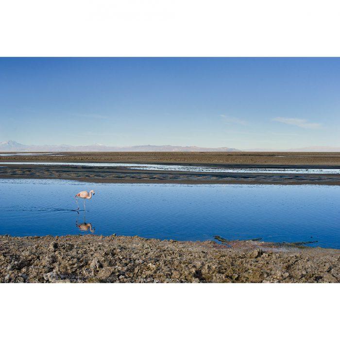foto de flamingo en el salar de atacama chile con un cielo muy azul